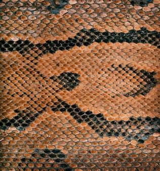 Textura de pele de cobra como pano de fundo
