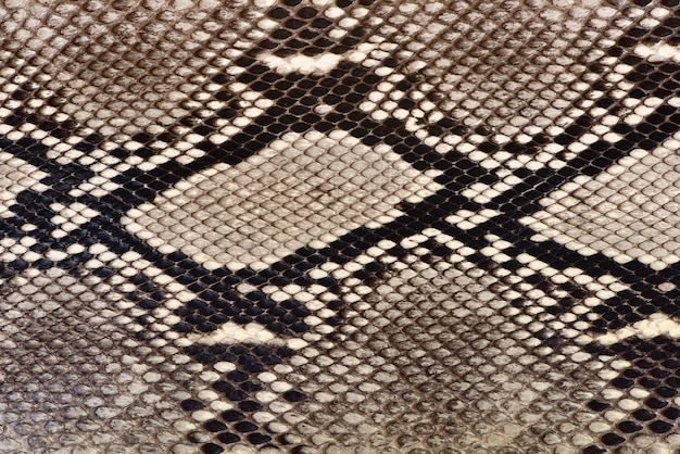 Textura de pele de cobra natural close-up