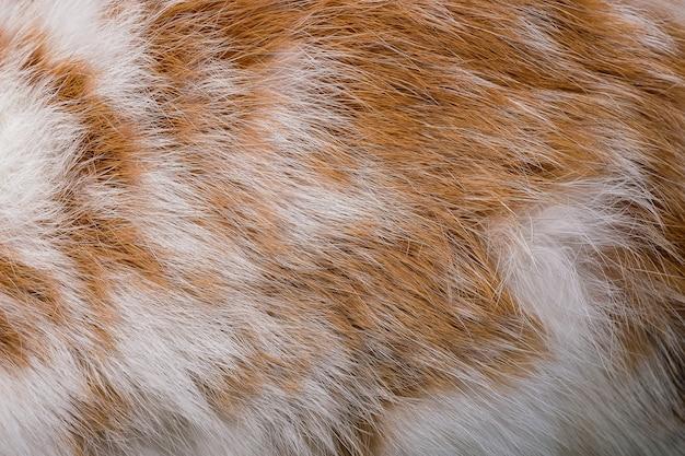 Textura de pele de coelho marrom e fundo de pele de animal