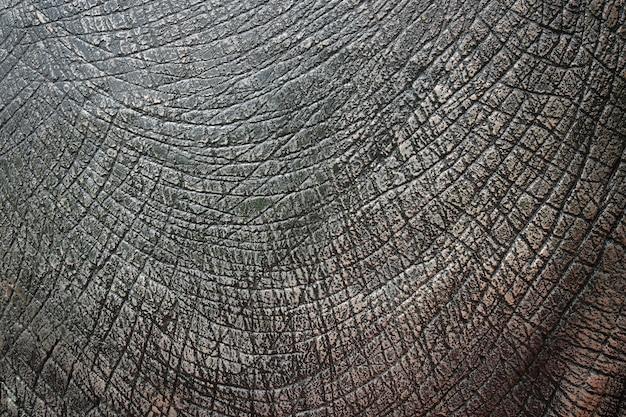 Textura de pele de dinossauro