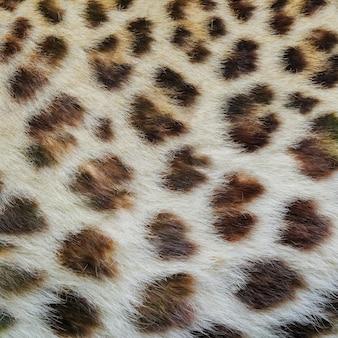 Textura de pele de jaguar, leopardo e jaguatirica.