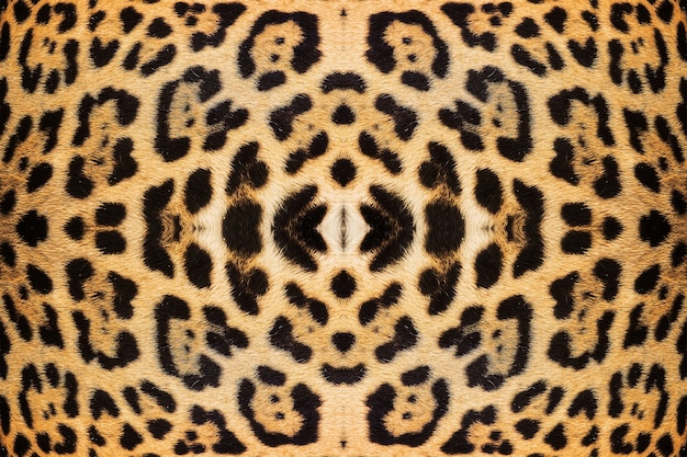 Textura de pele de leopardo para plano de fundo