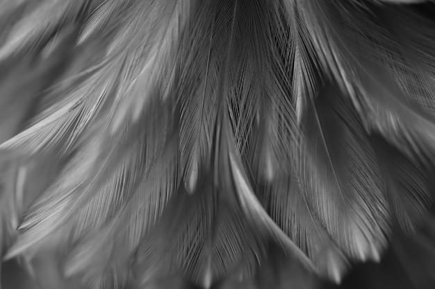 Textura de penas de galinhas de pássaro para plano de fundo, fantasia