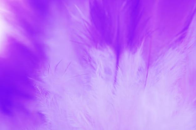 Textura de penas de galinhas desfocadas
