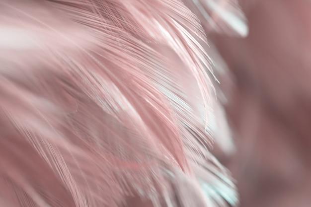 Textura de penas de pássaro para plano de fundo