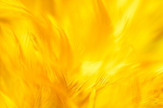 Textura de penas turva pássaro galinhas