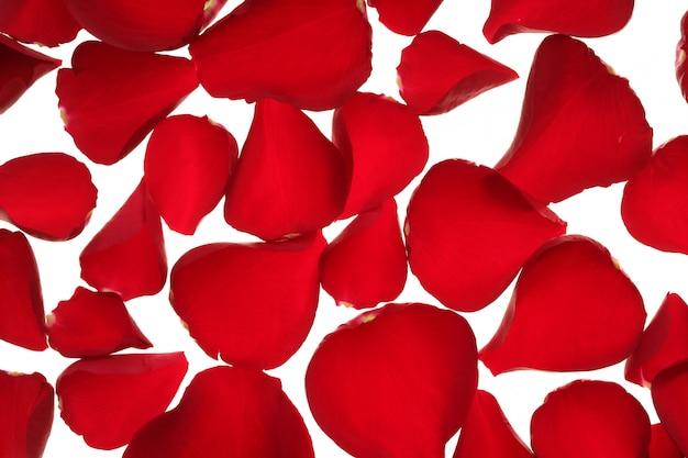 Textura de pétalas de rosa vermelha