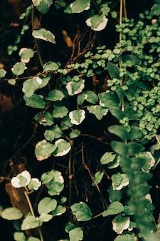 Textura de plantas da selva
