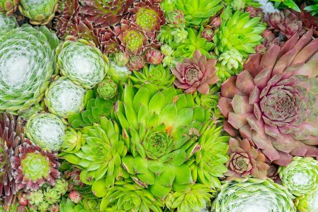 Textura de plantas verdes