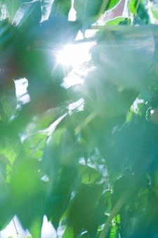 Textura de plantas