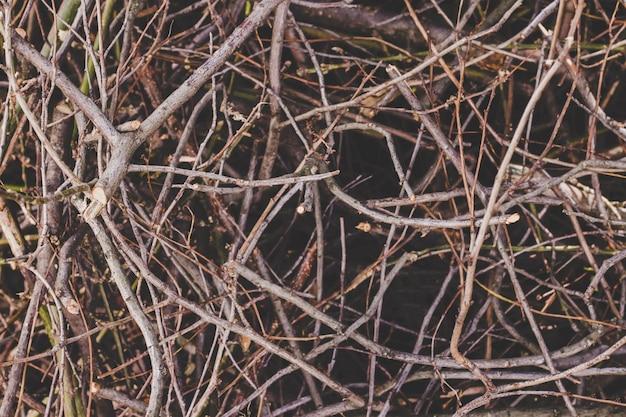 Textura de ramos secos, fundo da natureza.