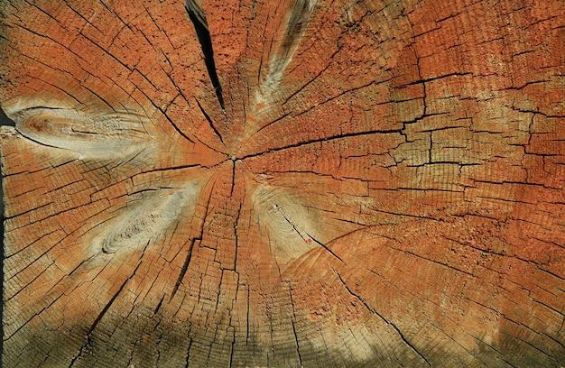 Textura de seção de madeira laranja.