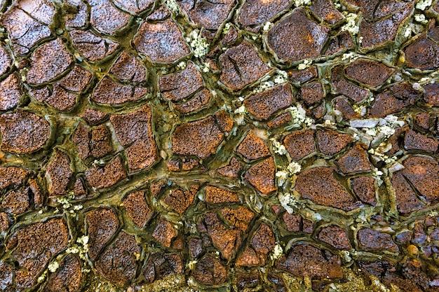 Textura de terra seca e rachada nas margens do rio tinto