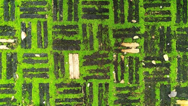 Textura de tijolo velho com musgo verde