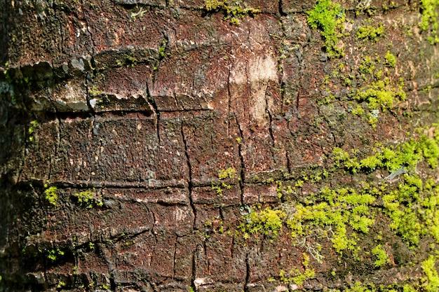 Textura de tronco de árvore áspero de coco com musgos verdes vibrantes, para plano de fundo
