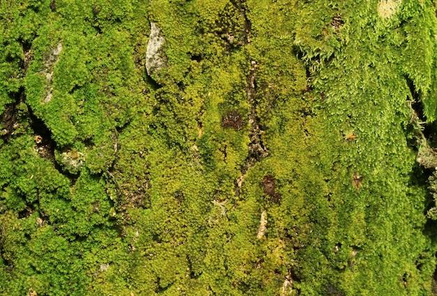 Textura de tronco de árvore cheia de musgos verdes vibrantes