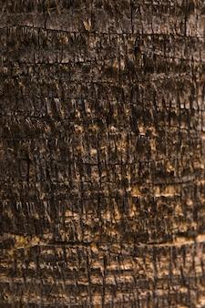 Textura de tronco de árvore close-up