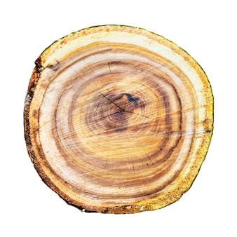 Textura de tronco de árvore de madeira isolada em fundo branco