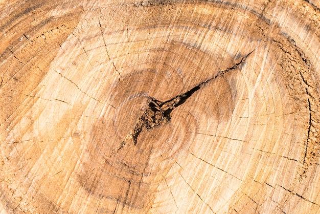 Textura de tronco de árvore de madeira pode ser usada como plano de fundo