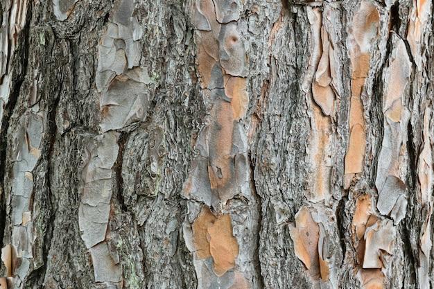 Textura de tronco de árvore descascando