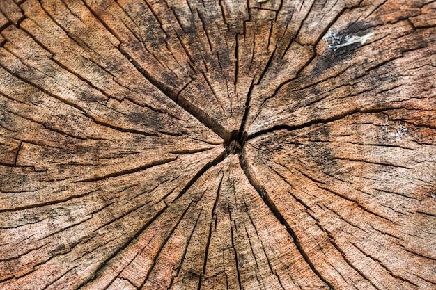 Textura de tronco de árvore marrom escuro ou fundo