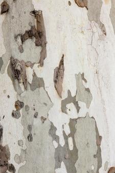 Textura de tronco de árvore plana em cores cáqui