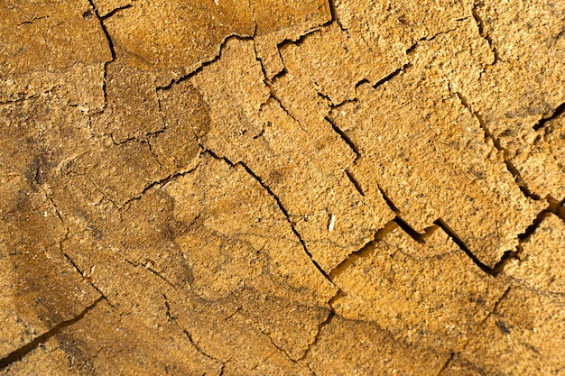 Textura de tronco de carvalho rachado