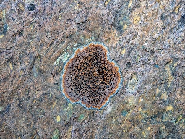 Textura de um líquen redondo em uma pedra em close-up. pedra bruta multicolor na luz solar. textura natural com espaço de cópia. mineral incrível. pedaço de pedra.