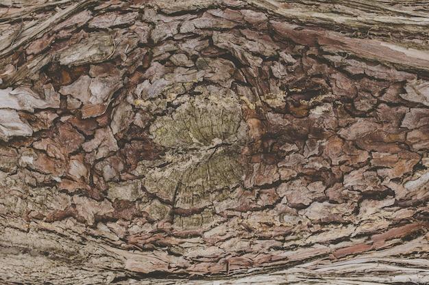Textura de uma casca de árvore