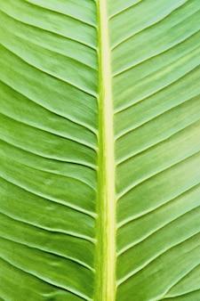 Textura de uma folha verde como pano de fundo, textura de folhas verdes