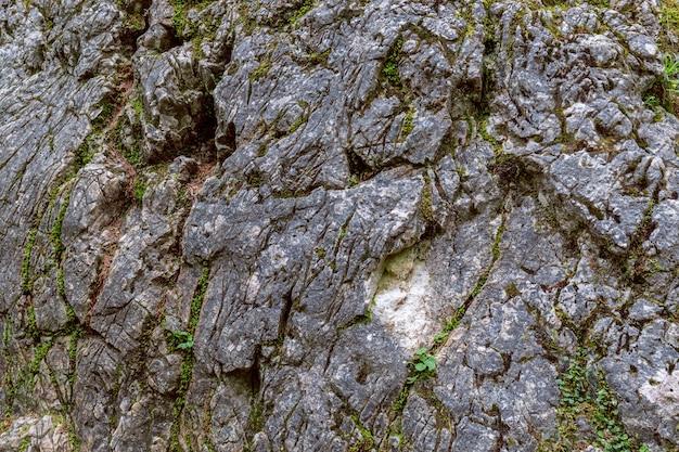 Textura de uma pedra coberta de musgo na floresta