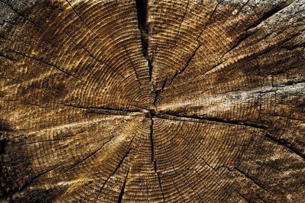 Textura do coto de árvore velho.