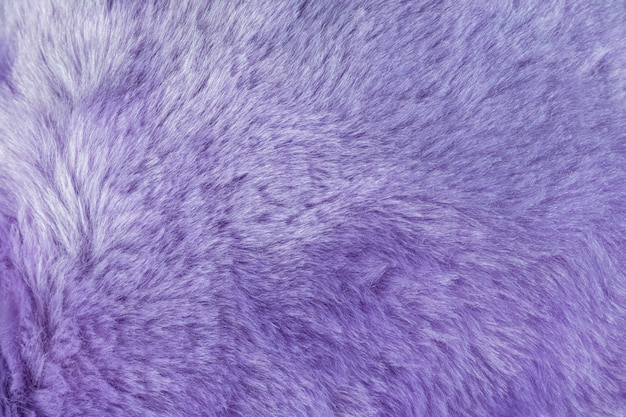Textura do fundo desgrenhado da pele com cor roxa. detalhe do material da pele peluda macia.