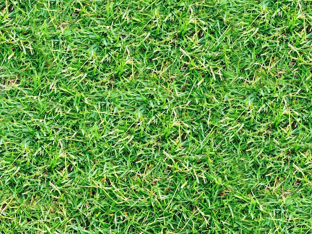 Textura do gramado
