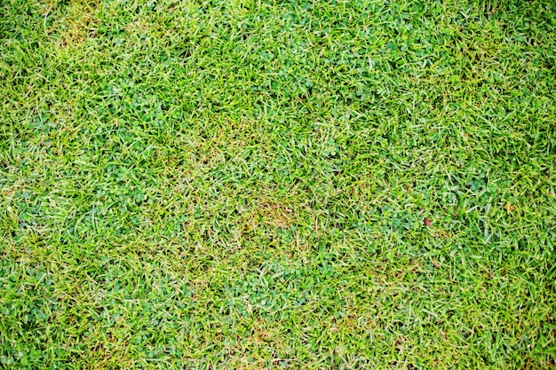 Textura do gramado.