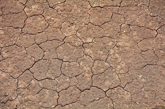 Textura do solo de rachadura no verão. do clima global