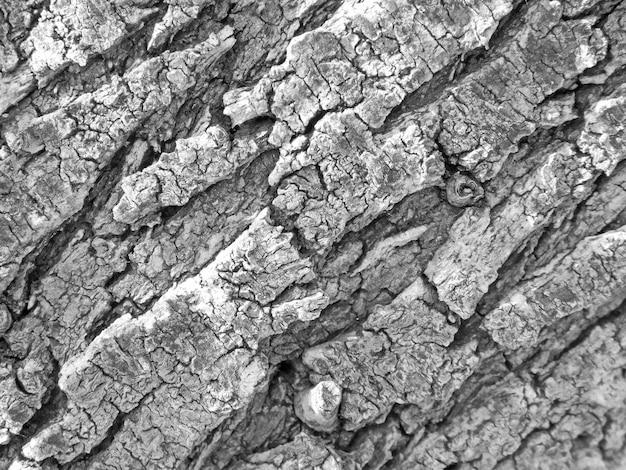 Textura do tronco da árvore