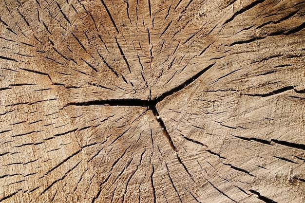 Textura do velho tronco