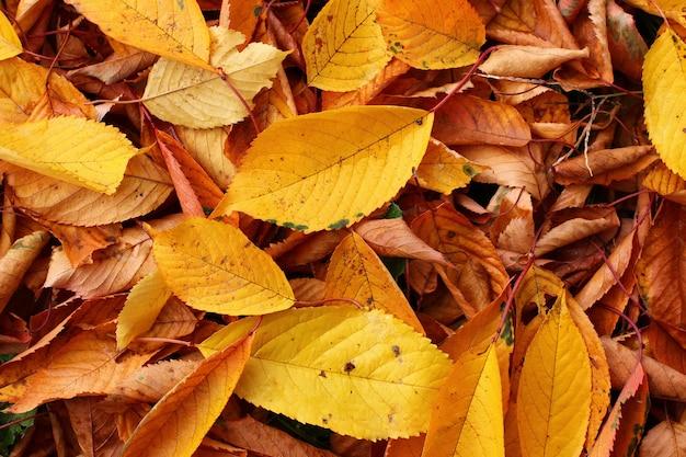 Textura e de folhas amarelas