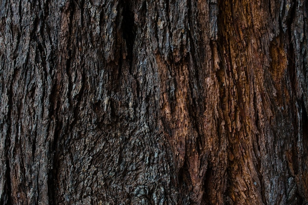 Textura e fundo de casca de árvore seca