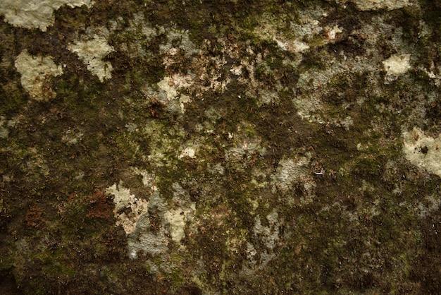 Textura e fundo verdes do musgo.
