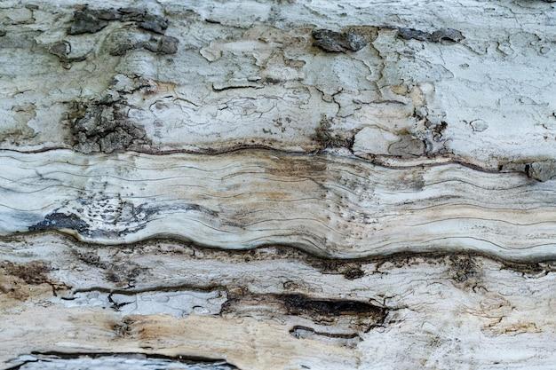 Textura em relevo da casca marrom de uma árvore de perto
