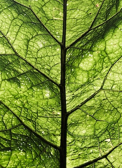 Textura fresca verde do fundo da folha do close-up