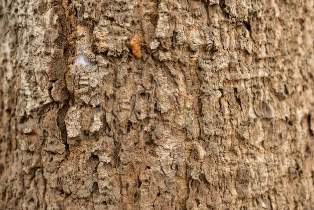 Textura gravada seca da casca marrom de uma árvore.