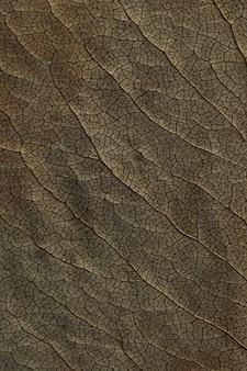 Textura macro de plantas de folhas secas para a superfície. detalhes de herbário plano.