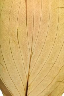 Textura macro de plantas de folhas secas para o fundo. detalhes de herbário plano.