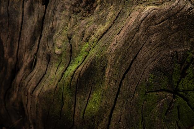 Textura misteriosa da casca de árvore