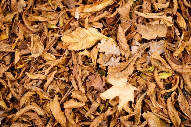 Textura natural das folhas de outono caídas da castanha.