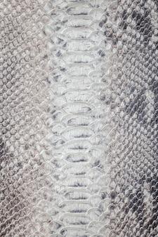 Textura padrão de pele de cobra