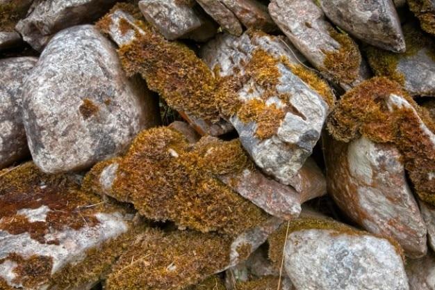 Textura pedras cobertas de musgo